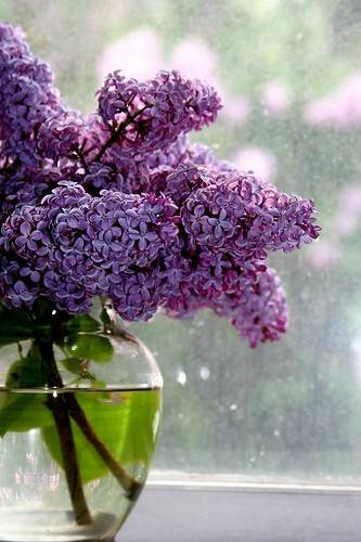 lilacs-vase
