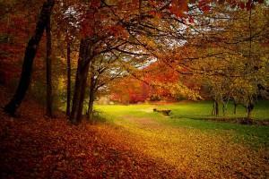 autumnleaves2-300x200